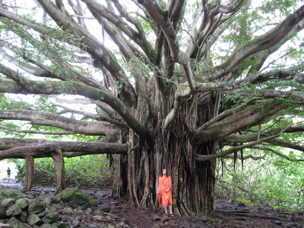 what are the main factors that contributed to banyan tree Read this free business essay and other term papers, research papers and book reports banyan tree's successful factors 1 what are the main factors that contributed to bayan tree's success.
